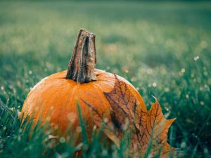 Pumpkin on grass with fall leave